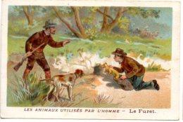 Les Animaux Utilisés Par L´homme : Le Furet, Utilisé à La Chasse. - Other