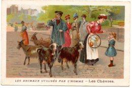 Les Animaux Utilisés Par L´homme : Les Chèvres. - Other