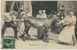 Veterinary Veterinaire Enema Curing A Donkey Lavement D' Un Ane - Donkeys