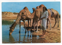 Tunisie--DJERBA--1974--Sur La Route Du Diorf (animée,chameaux) éd Edichem--timbre - Tunesië