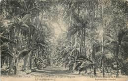 Ile Maurice - Allée Du Tombeau De Paul Et Virginie à Pamplemousses - Mauritius