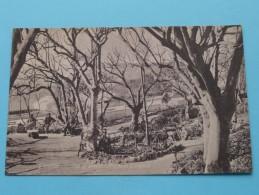 Alameda Gardens ( Top Of Grotto ) Gibraltar - Anno 19?? ( Zie Foto Voor Details ) !! - Gibraltar
