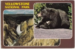Yellowstone National Park, Lower Falls, Black Bear, 1989 Used Postcard [18653] - Yellowstone