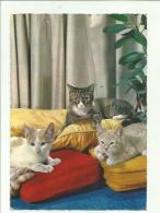 132201 CARTOLINA CON  GATTO CAT CATS - Gatti