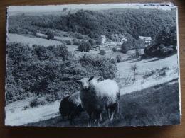 Bodange, Un Coin Pittoresque (moutons) --> Beschreven 1965 - Fauvillers