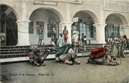 ADEN ARRIVAL  OF A CARAVAN - Yemen