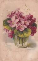 Catharina Klein - Very Old Postcard - Purpleflower Violet Flower - Klein, Catharina