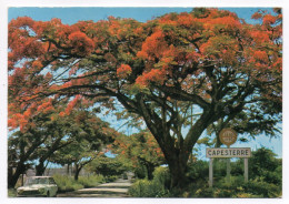 Guadeloupe--CAPESTERRE--1984--Flamboyants (voiture Peugeot) ,cpm  N° S.022 éd Images Caraibe...à Saisir- - Guadeloupe
