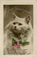CATS - HEARTY BIRTHDAY GREETINGS RP Cat256 - Katzen