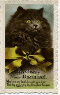 CATS - TO GREET YOUR BIRTHDAY RP Cat270 - Katzen