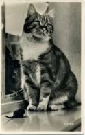 CATS - 1961 RP Cat284 - Katten
