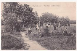 Kapellen: Vue Dans Les Bruyères. - Kapellen