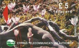 CHYPRE TELECARD 5 PHOTO DE FLEURS N° 17CYPB238229 B  ETAT COURANT - Chypre