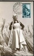 12118 Italia, Maximum Lire 65 Italia Al Lavoro, La Canapa, Emilia Romagna, Annullo Codigoro 1953 - Maximumkarten (MC)