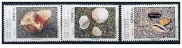 Cipro Turca - 1994 - Nuovo/new MNH - Conchiglie - Mi N. 387/89 - Ongebruikt