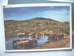 Mongolia With Horses - Mongolië