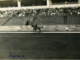 Londres London Olympia Horse Show Equitation Dressage Lieutenant Lavergne Needle Ancienne Photo 1938 - Sport