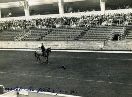 Londres London Olympia Horse Show Equitation Dressage Lieutenant Lavergne Needle Ancienne Photo 1938 - Sports