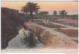 Algérie CPA Jardin Dans L'Oasis A Touggourt 2 Scan - Algeria