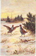 Chasse, Hunting Quail Kwartel  Patridges  Oiseau  Geflügel Illustrateur  Old  Postcard. Cpa.ca. 1900 - Caza