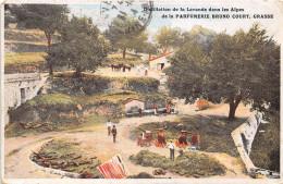 06-GRASSE- PARFUMERIE BRUNO COURT, DISTILLATION DE LA LAVANDE - Grasse