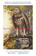 Buse Pattue - Ruigpootbuizerd - Vögel