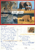 Wild Animals, South Africa Postcard Posted 2006 Stamp - South Africa
