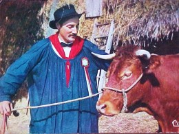 Cpsm FOLKLORE Du LIMOUSIN , LOU GERBASSOU , Maquignon Et Sa VACHE , Man & His COW  Recto Verso  Prix Fixe - Vaches