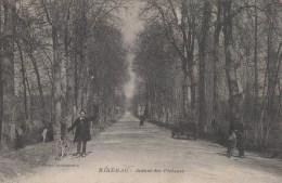 RIBERAC   AVENUE DES PLATANES - France