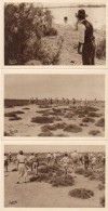LES SAINTES MARIES DE LA MER - 3 CPA - Camargue - Toros, Gardians, Arrivée De L' Anouble  (89482) - Saintes Maries De La Mer