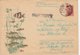 48002- TIGER BARB, ZEBRA, AQUARIUM FISHES, COVER STATIONERY, 1964, RUSSIA-USSR - Pesci