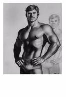 TOM OF FINLAND GAY INTEREST POSTCARD 44 -  SIZE: 15X10 CM. APROX. MINT - Cómics