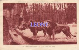 """CPSM 9X14  """" JARDIN ZOOLOGIQUE - Le PLATEAU Des LIONS - EXPOSITION COLONIALE INTERNATIONALE PARIS 1931 - Lions"""