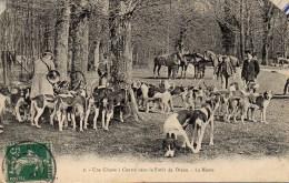 Une Chasse à Courre Dans La Forêt De Dreux  - La Meute - Hunting