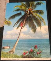 Jamaica Coconut Pickers 2JM30 John Hinde - Used - Postcards