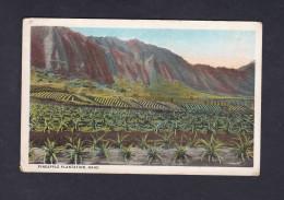 USA Pineapple Plantation Oahu - Oahu