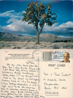 Joshua Tree National Monument, California, United States US Postcard Posted 1989 Stamp - United States