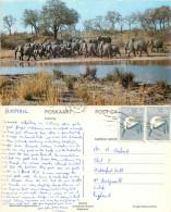 Elephants, Kruger National Park, South Africa Postcard Posted 1977 Stamp - Sudáfrica