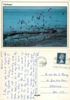 Sea Gulls, Harlingen, Friesland, Netherlands Postcard Posted 1991 Stamp - Harlingen