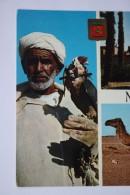 """Marocco Fauconnier""  HALCONEROS / FALCONER / FAUCON - Old Postcard 1970s - Oiseaux"