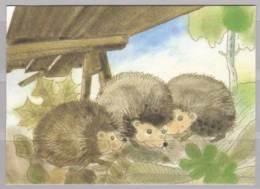 Igel - Tierwelt & Fauna