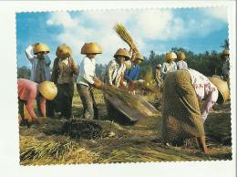 133094 CARTOLINA DI BALI - Cartes Postales