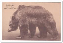 Ursus Arctos - Bären