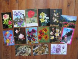 Lot De 15 Cartes Sur Les Fleurs & Plantes      Edelweiss, Roses, Anémones Ect... - 5 - 99 Postcards