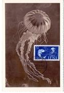 MAROCCO  SDIDI IFNI MAXIMUN POST CARD    (AGO160142) - Pesci E Crostacei