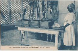 CPA GUADELOUPE Station Agronomique De Destrellan Culture De La Canne à Sucre Semis Série Charles Boisel N° 169 - Guadeloupe