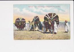 Tunisie Sahara Des Chameaux Bondés Avec Leur Guides - Tunisia