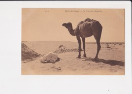 Désert Du Sahara La Prière Du Chamelier    N° 459 A - Algérie