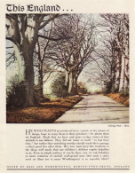 Vintage 1951 Advert This England Bass & Worthington Ashridge Park Herts - Advertising