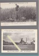 Agriculture - Lot De 3 CP - Engrais - Mine De Potasse D'Alsace : Cristallisation + Usine, Effets Sulfate D'ammoniaque - Otros